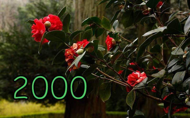 2000 publicações em pouco mais de 5 anos de blog, é obra!