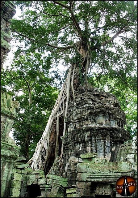 Ta-Prohm-Templos-de-Angkor_17