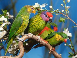 Pássaros e flores.