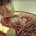 Pigeon chicks died unexpectedly, see how the parents responded