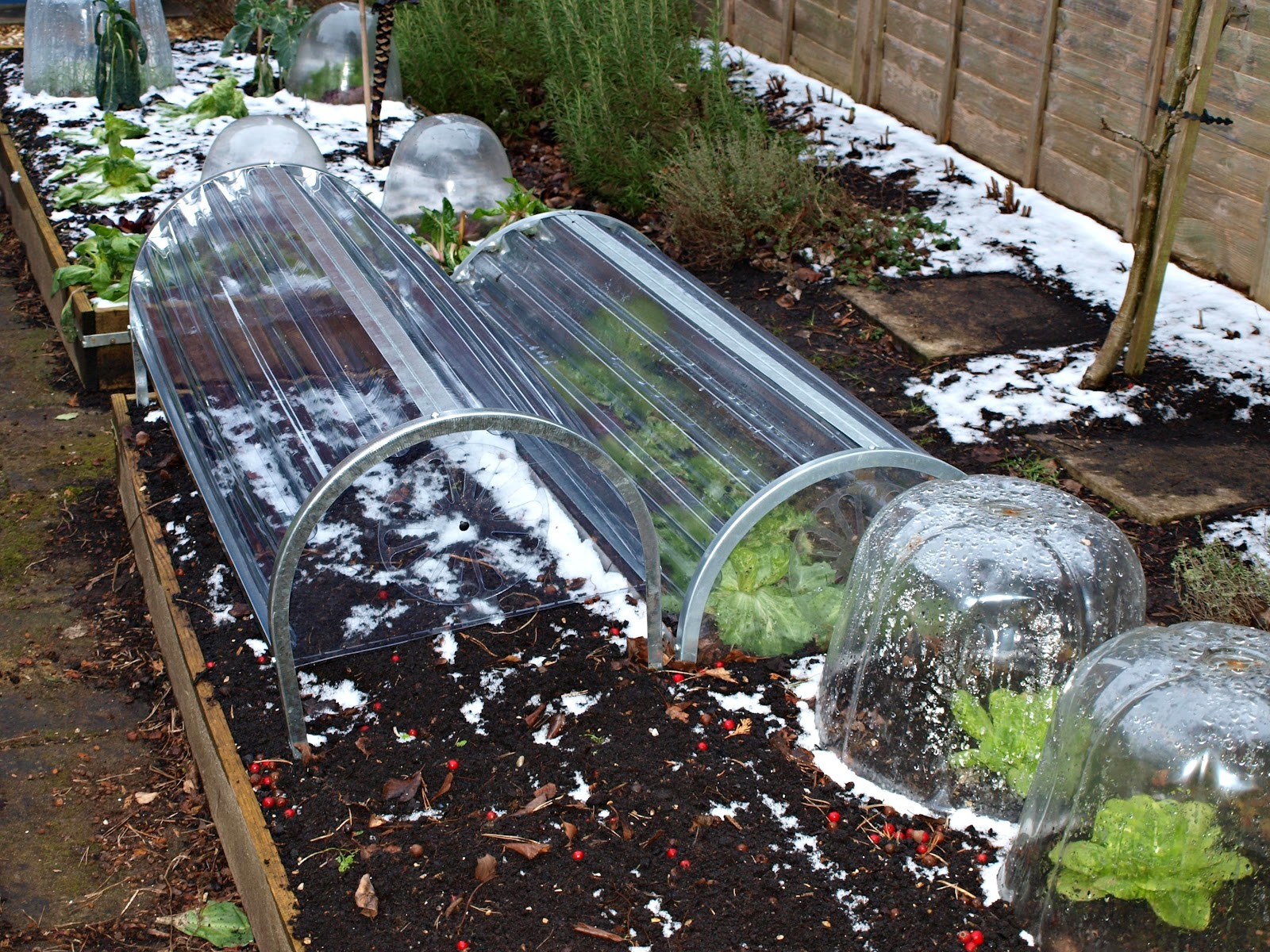 Mark 39 s veg plot crop protection for Garden cloche designs