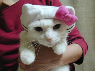 Cat in Hello Kitty costume