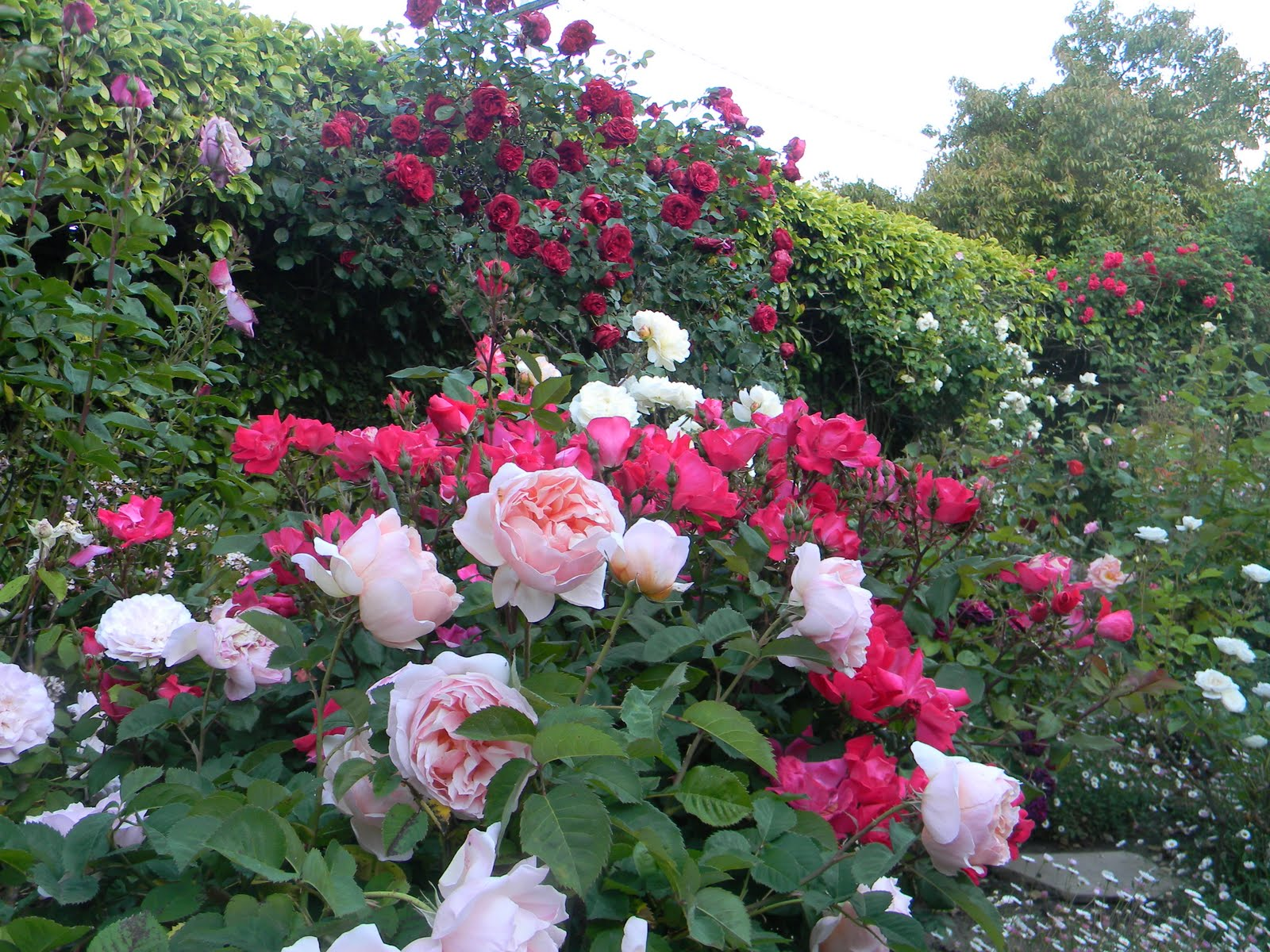 Beautiful Rose Gardens Images Reverse Search