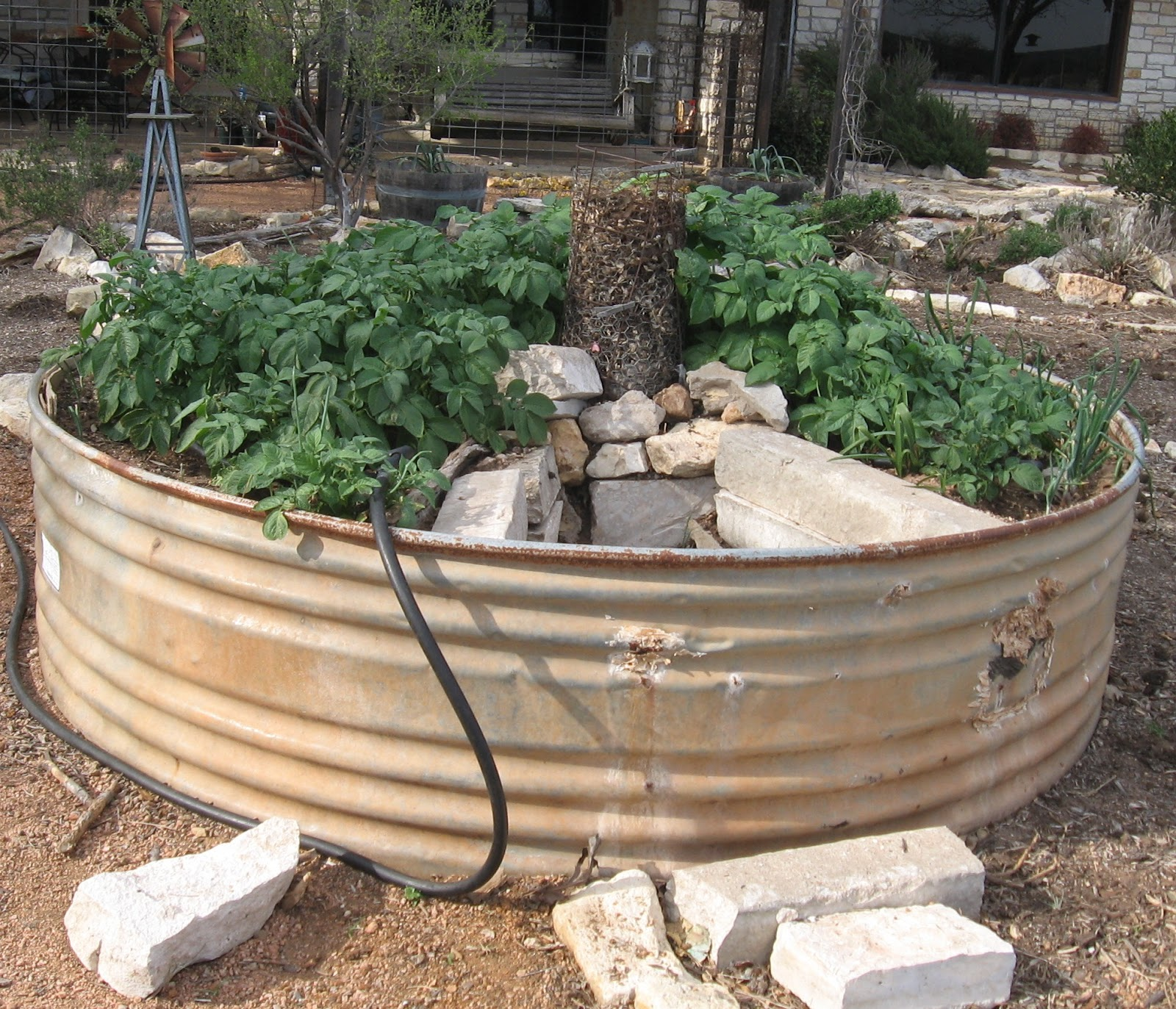 Organicgreendoctor keyhole garden and tomatoes for Keyhole garden designs