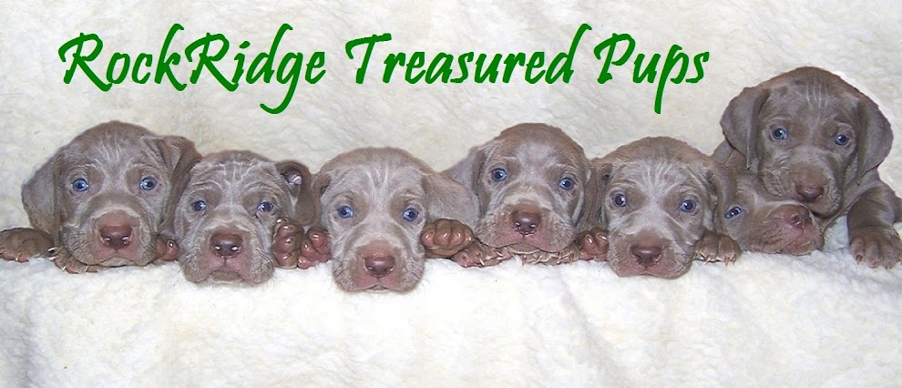 Rockridge Treasured Pups