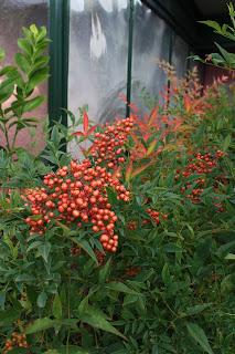 Il piccolo giardino di l ottobre tra rose bacche e frutti for Albero per piccolo giardino