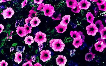 #2 Spectacular Flowers Images for Desktop