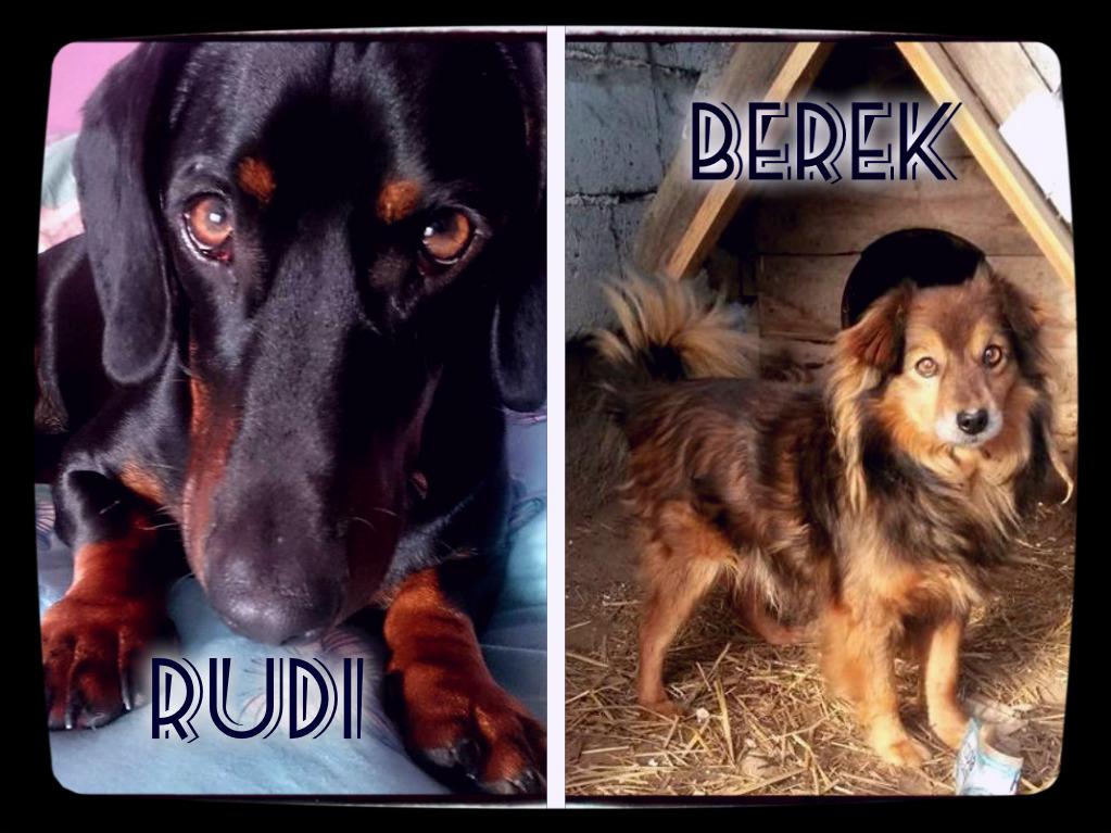 Moi psi strażnicy: Rudi (2013-) i Berek (2005-)