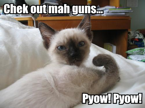 Funny Animals Funny Pictures: Funniest Cats and Dogs with Guns