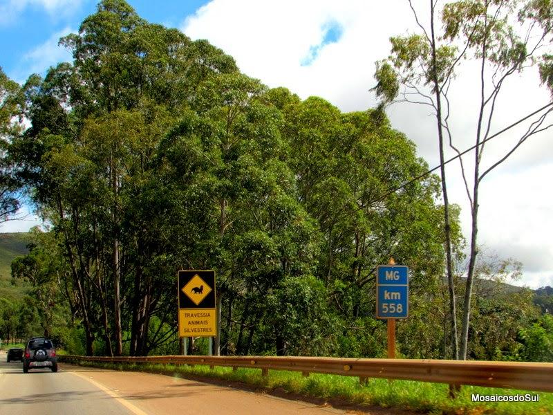 Foto da placa avisando sobre animais selvagens na estrada