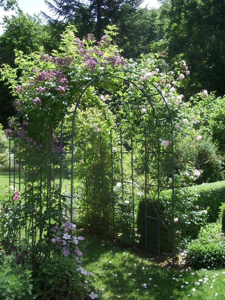 les pins noirs rosiers veilchenblau new dawn et soir e de bonheur. Black Bedroom Furniture Sets. Home Design Ideas