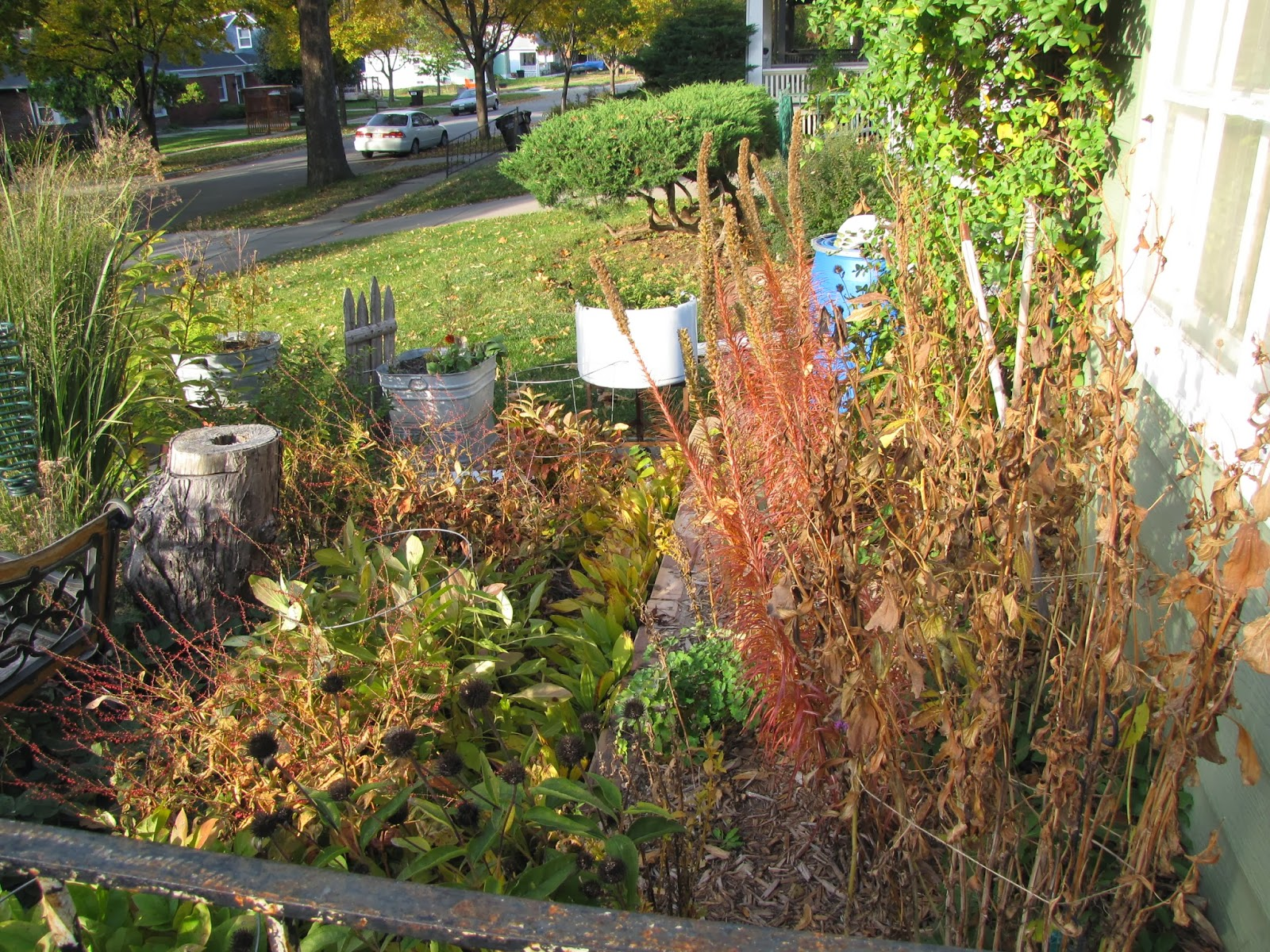 A Corner Garden: Fall in the Front Yard