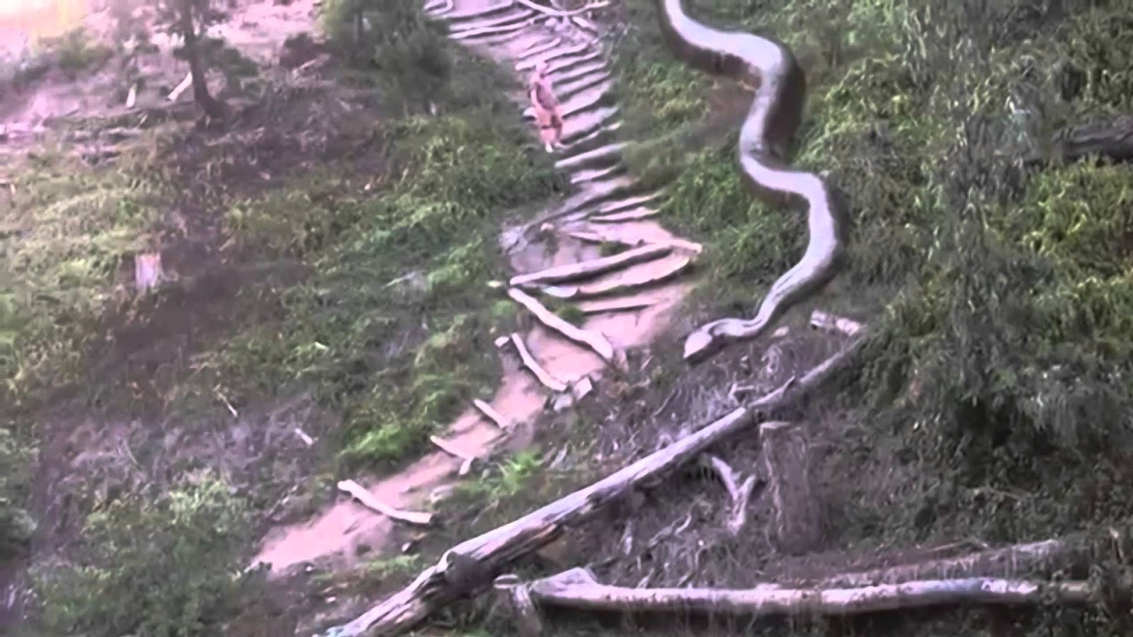 A man is shot while passing by a giant snake