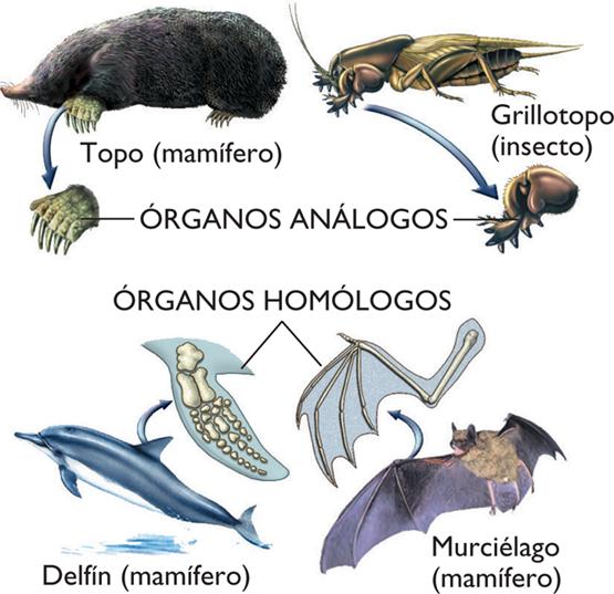Ciencias para el Mundo Contemporáneo : Los órganos análogos y homólogos.