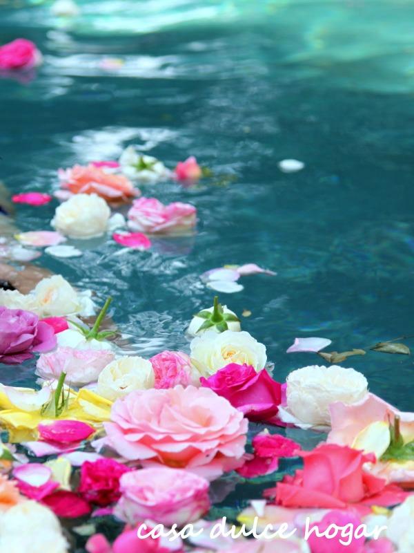 Rosas sobre el agua guia de jardin - El jardin de lola ...