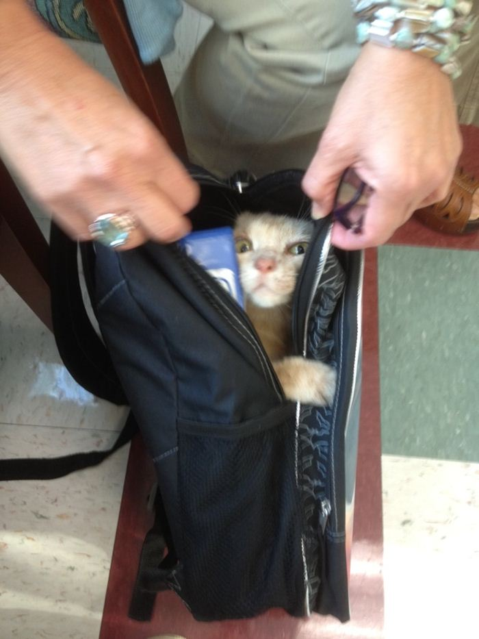 cat in bag, funny cats, cat photos, cat pictures