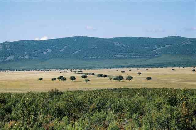 El secreto de los paisajes tipos de climas en espa a for Clima mediterraneo de interior