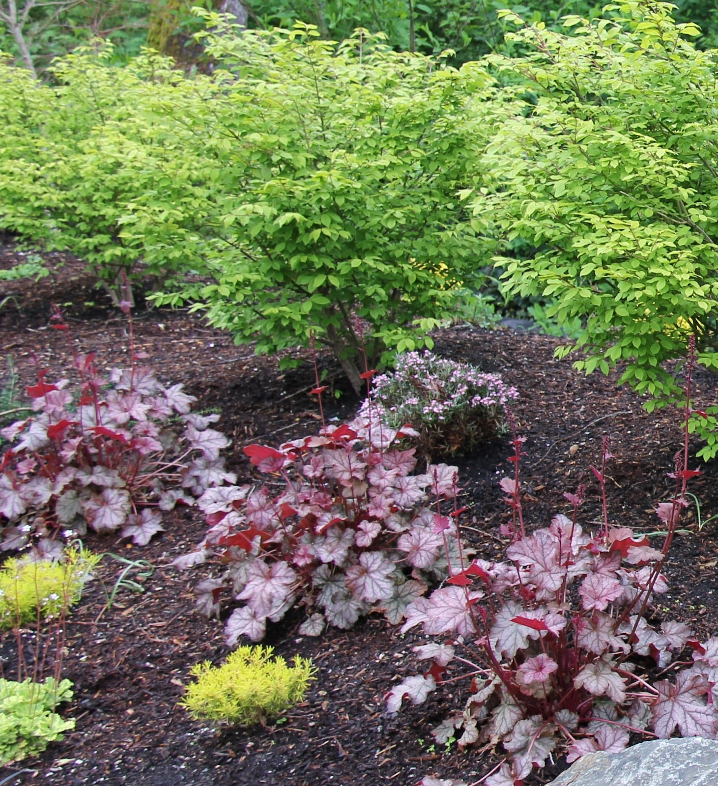 Debbie Angel\'s Garden: May 2012