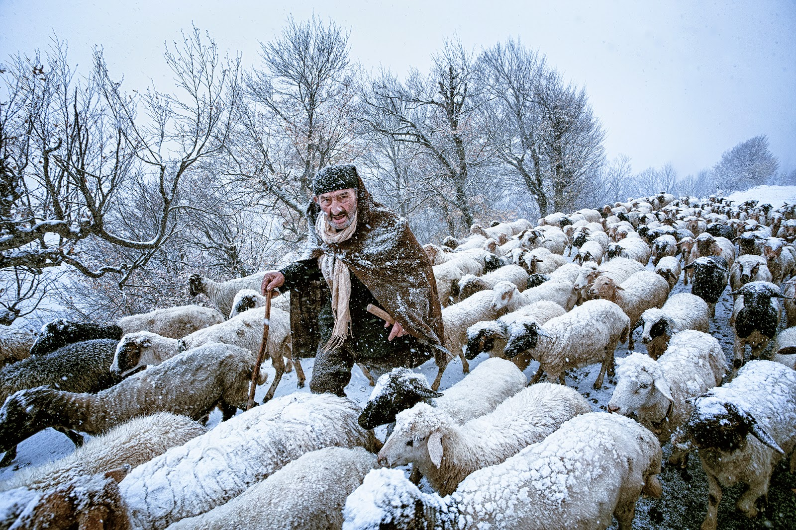 Copyright: ©Saeed Barikani, Iran, Shortlist, Smile, Open, 2015 Sony World Photography Awards. Image Name: Old Shepherd. Image Description: An old shepherd that had been surprised by snow storm in Gilan's countryside in the north of Iran