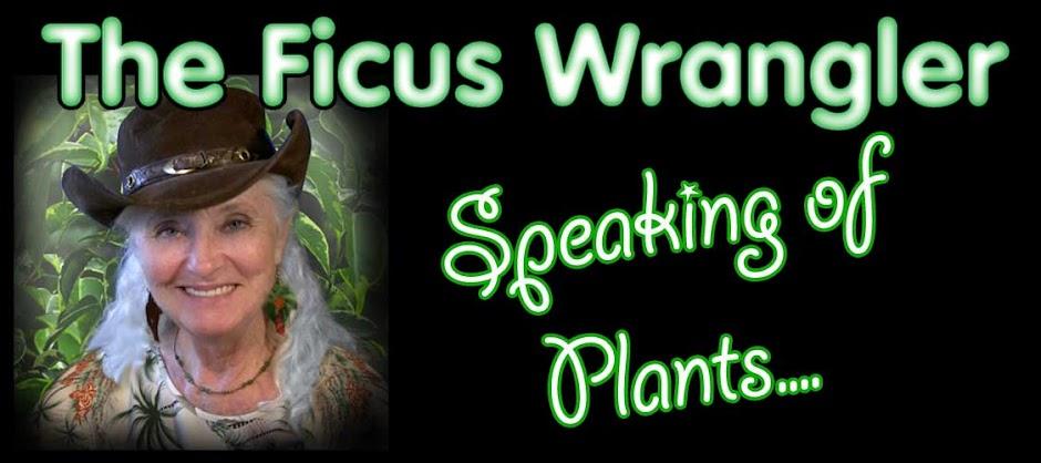 The Ficus Wrangler