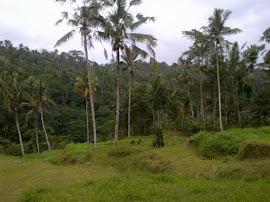 Ubud Terrace Camp
