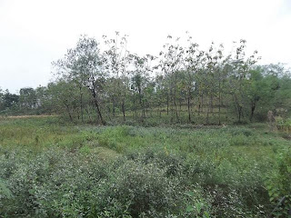 tanah perkebunan dijual FANTASTIS, KEBUN DI JAWA TENGAH DAN JABAR  SEHARGA 4 RIBU AN PER METER