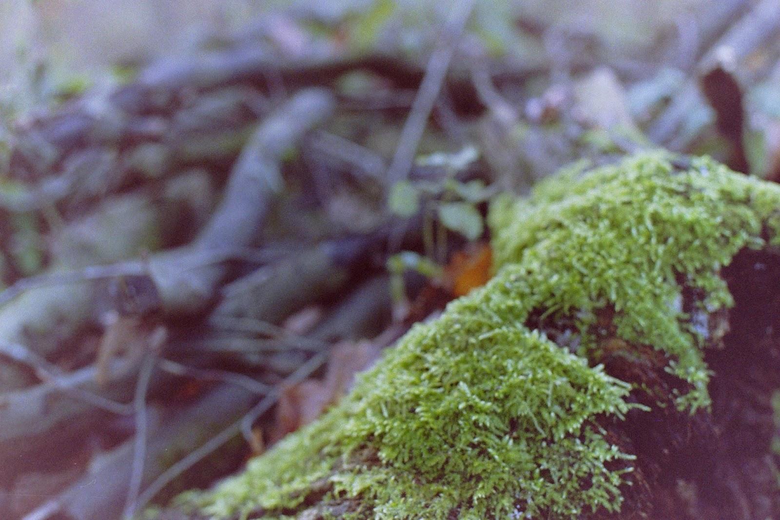 analoge Fotografie, Kamera, Ruhrgebiet, Wald