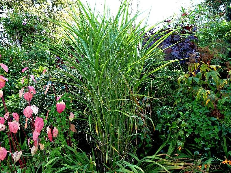 arte y jardiner a plantas perennes altas para la parte trasera de los m rgenes. Black Bedroom Furniture Sets. Home Design Ideas