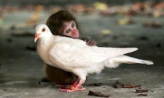 Amor Incondicional Animal
