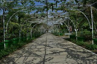 Garin Farm main alley