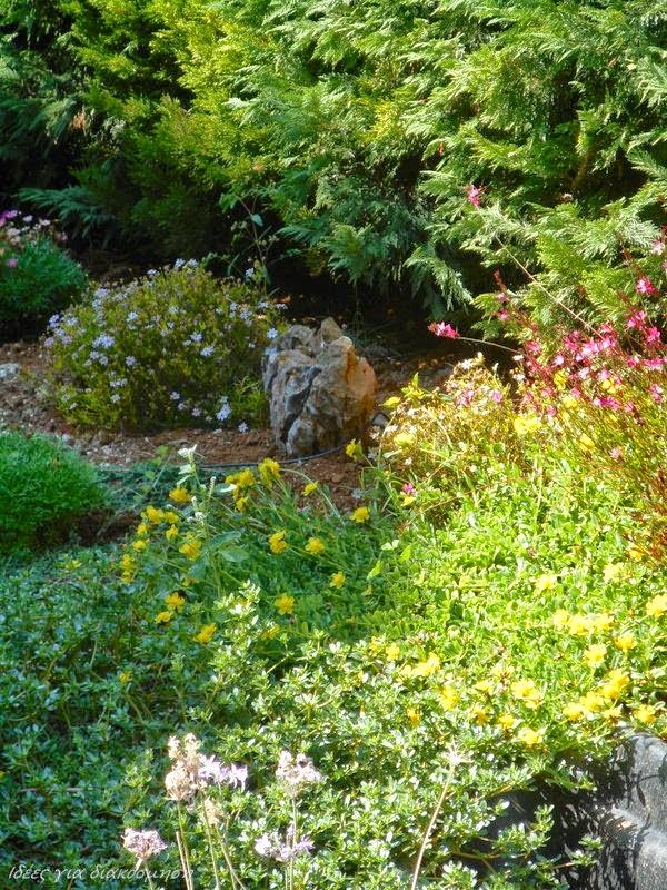 Ο κήπος μου!
