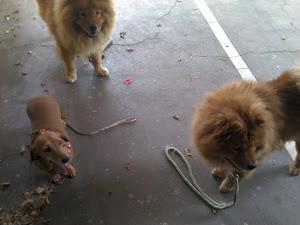 Nossos filhos caninos!
