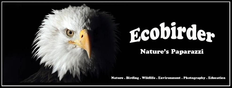 Ecobirder