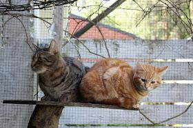 Klikkaa kissablogiini: