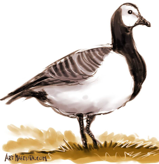 En  fågelmålning av en Vitkindad gås från Artmagentas svenska galleri om fåglar