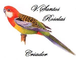 V. Santos FNP - 121 REGISTO DE CRIADORE ICNB (em breve)