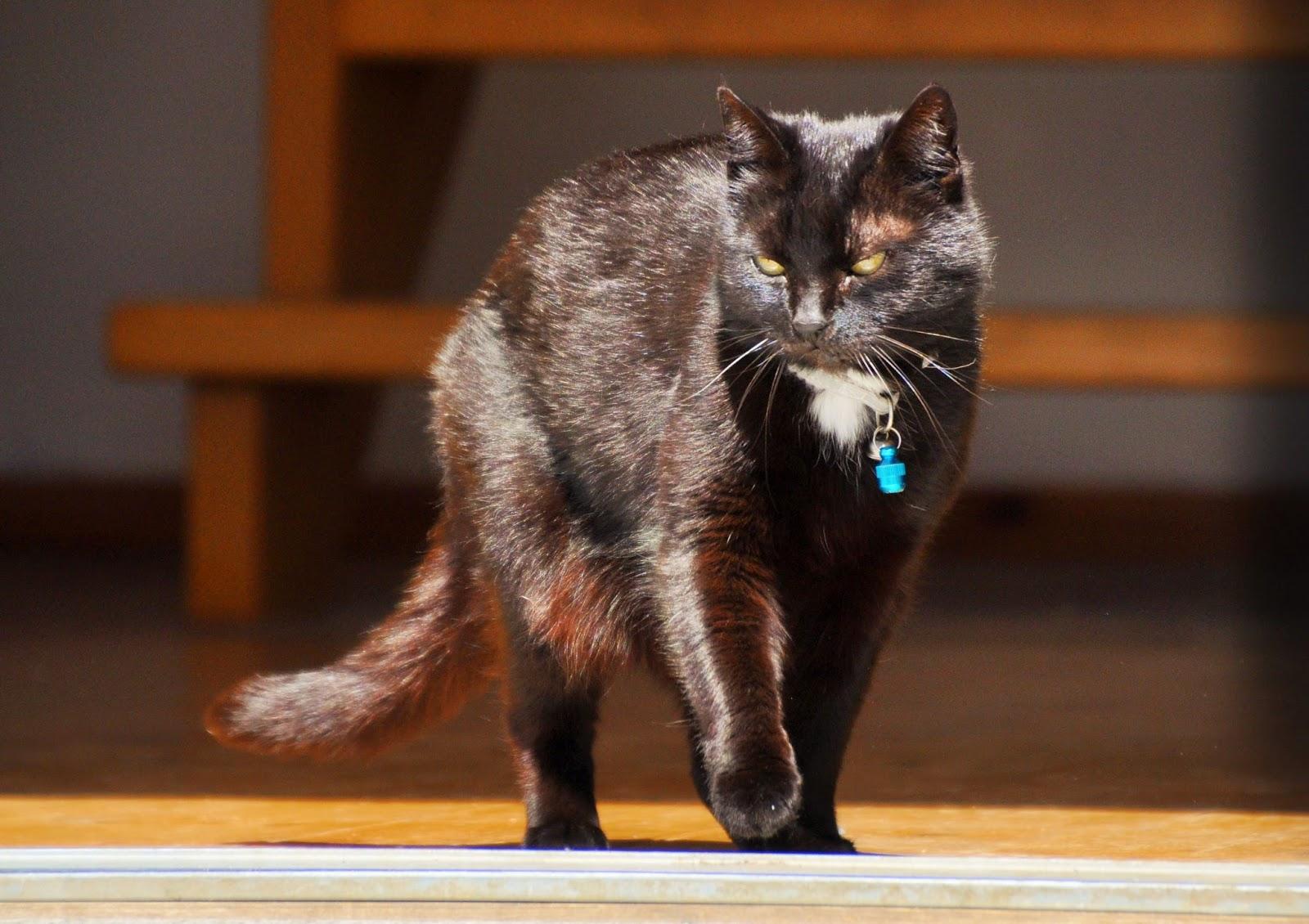 pin der hund frisst sehr schnell und die katze relativ. Black Bedroom Furniture Sets. Home Design Ideas