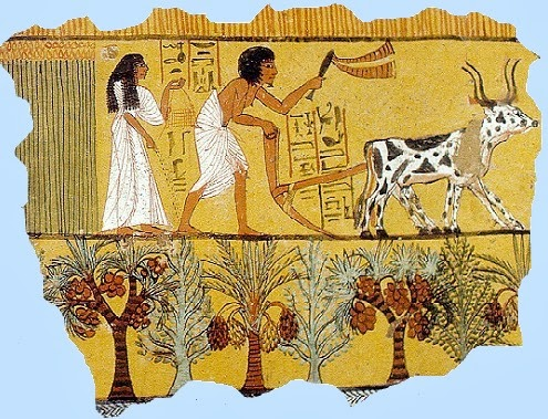 Ancient egyptians had simple farming tools such as winnowing scoops