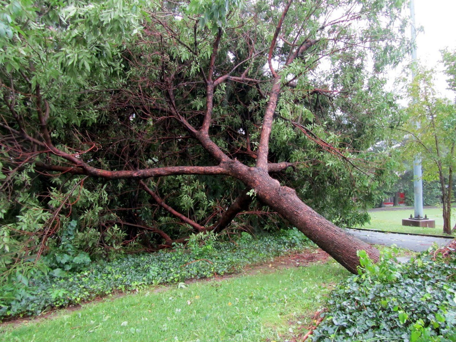 Roosevelt Islander Online: Hurricane Irene Topples ...