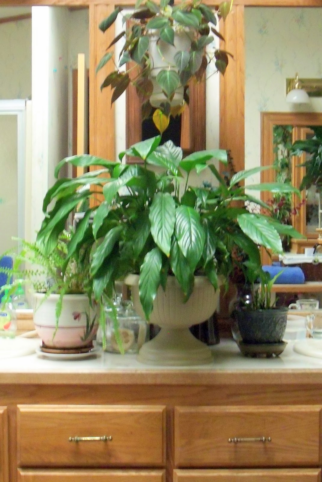 Make the best of things march 2012 for Peace lily in bathroom