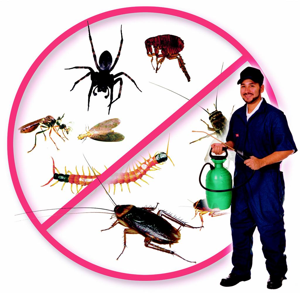 Pest Control Services : Pest control services bangalore company