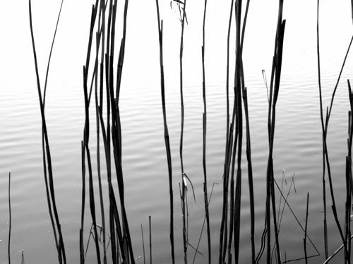Graphic Art in Nature 6 - black and white photography