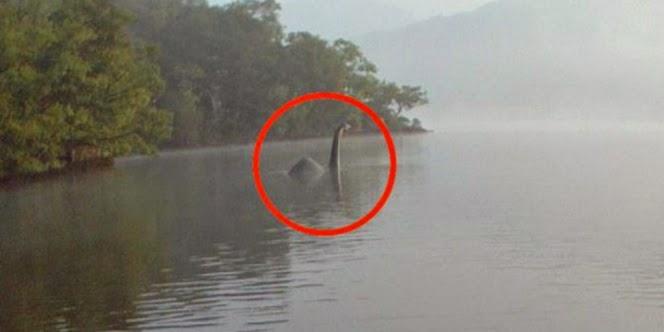 Inilah Foto nyata hewan purba monster Loch Ness