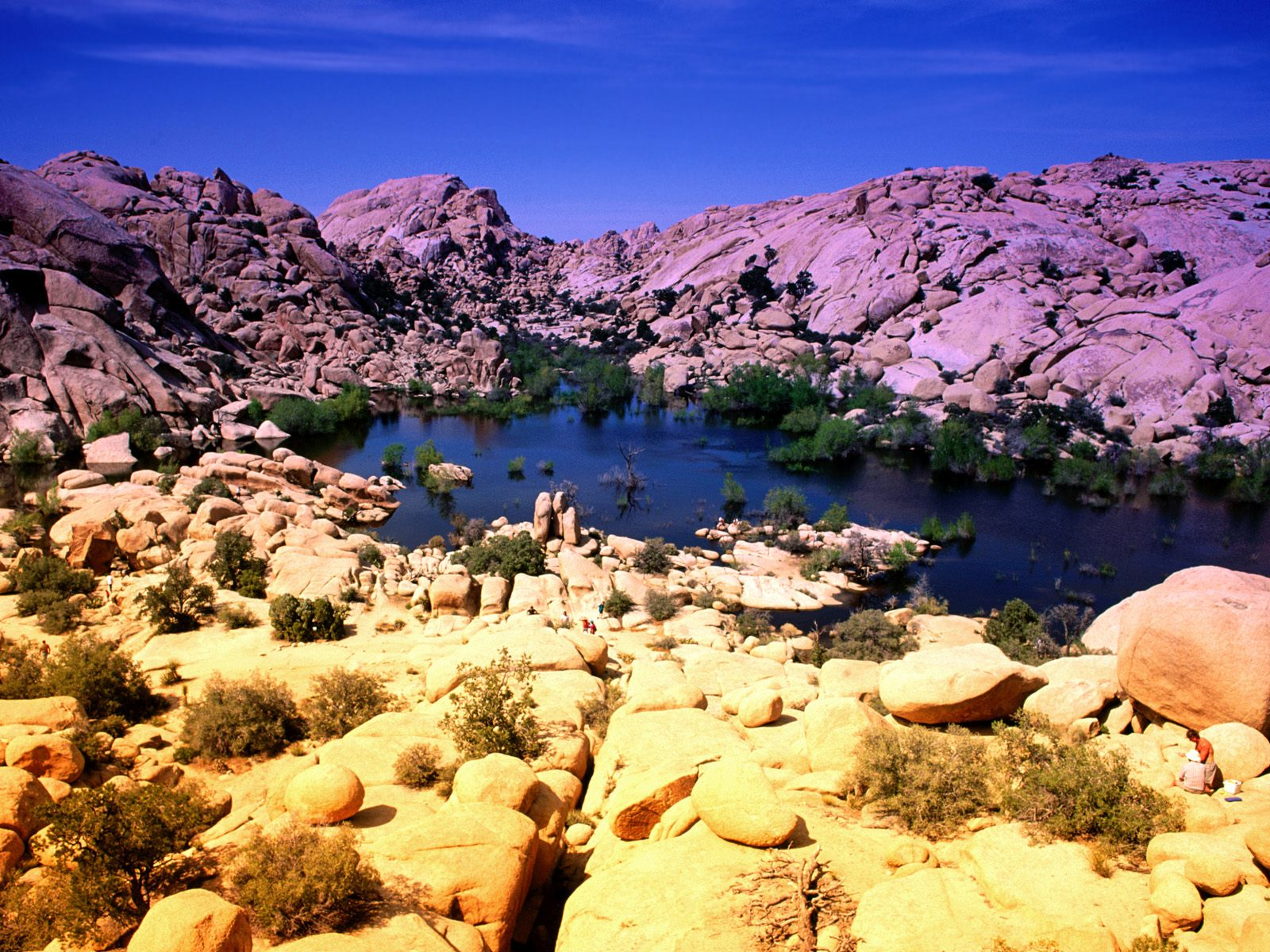 joshua tree national park single mature ladies Chalk up another example of visitors abusing joshua tree national park for two young women making a parkour team apologizes for joshua tree spree | kcet.