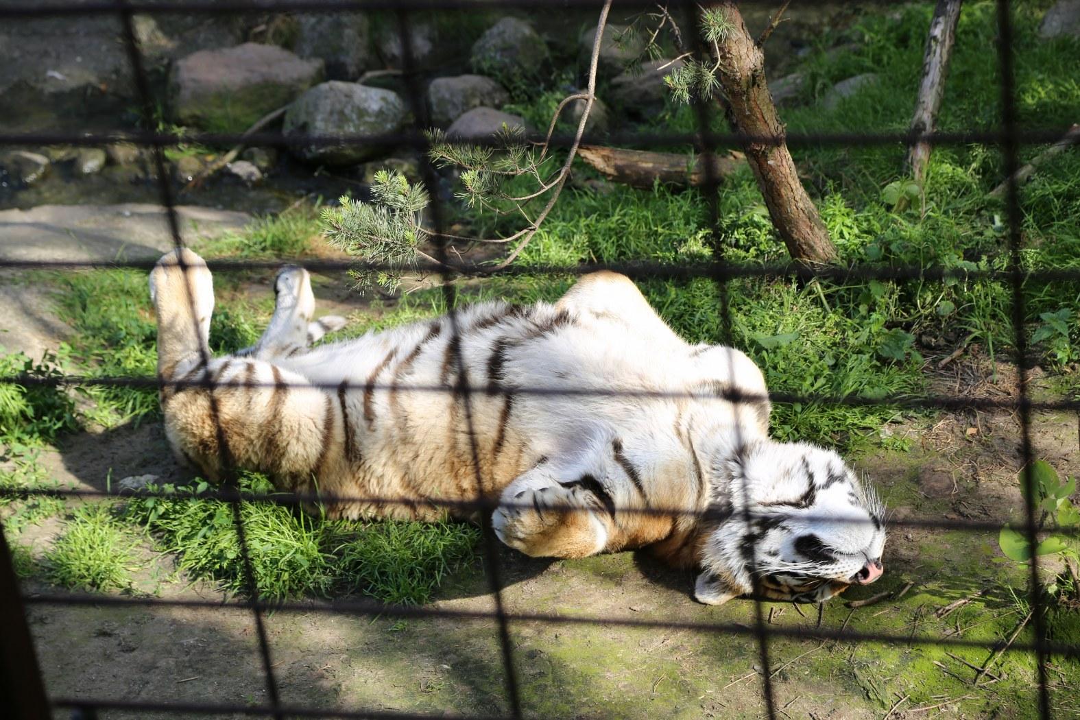 fed kvinde odense zoo kort