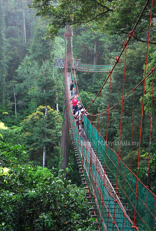 ... 27-meter-high canopy walkway which offers a peek into abundant bird life in the forest canopy here. A three level intersection makes the canopy one of ... & Canopy Walk at Danum Valley Sabah - Malaysia Asia