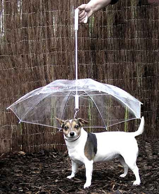 Cool Umbrellas and Creative Umbrella Designs (15) 20