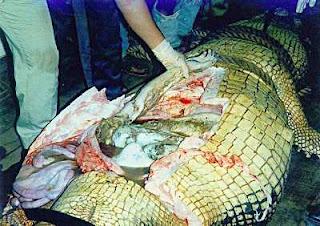 http://2.bp.blogspot.com/-qlvhukll6hs/TwK-O2eS1NI/AAAAAAAAGIQ/ruWgGqFQkG4/s320/buaya%2Bmakan%2Bmanusia.jpg