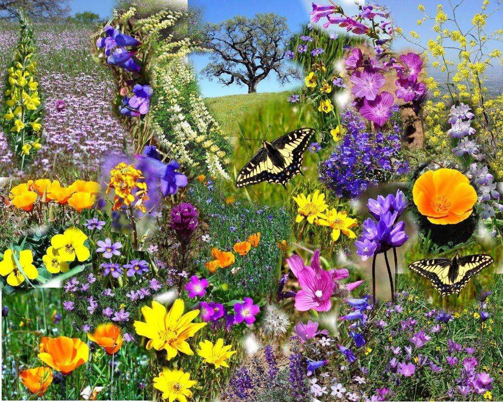 Flori De Primavara Flori Flori De Primavara Imagini Flori De Campie