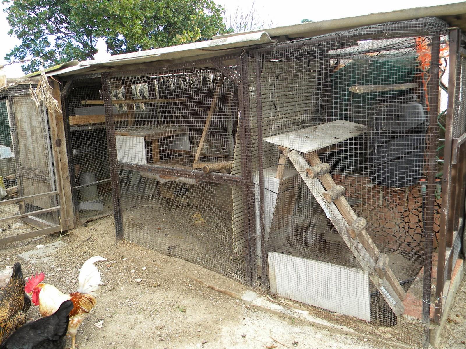 El huerto de tatay convivencia de gallinas - Casas para gallinas ...